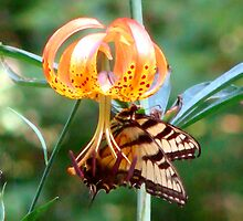Tiger Lily and Swallowtail by vigor