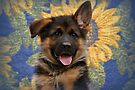 Drigon - German Shepherd Puppy by Sandy Keeton