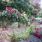 The garden, Kilmore, Victoria Australia by Margaret Morgan (Watkins)