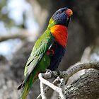 Rainbow pose by Joel Fourcard