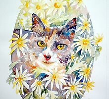 Molly in the daisies - photo by Annette Hagger by scallyart