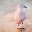 Seagull 5 by pennyswork