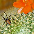 Redback Decor - Australian Gardens by Barry Armstead