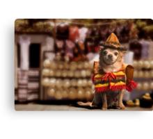 Chihuahua Bandito Canvas Print