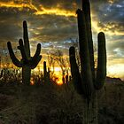 Saguaro Sunset  by Saija  Lehtonen