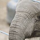 Baby Elephant by Robert  Miner