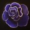 Purple Rose by Alexander Beedy