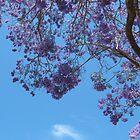 Jacaranda by melforrest