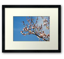 Scented Petals In The Sky Framed Print