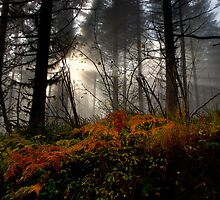 The Glory Of The Rays by Charles & Patricia   Harkins ~ Picture Oregon