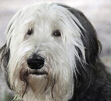 Shaggy Dog by Tom Allen