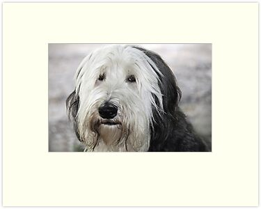 Shaggy Dog by Tom Allen