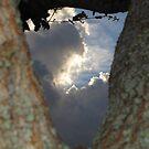 Naturally Framed Sky - Florida by Glenn Cecero