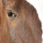 abstract eye on horse by dianadudley
