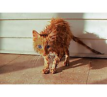 Wet Kitty Photographic Print