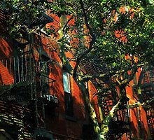 On the Shady Side by RC deWinter