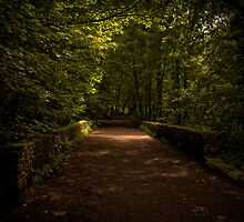 Dark Road of the Forest - Gnoll, Neath by digihill