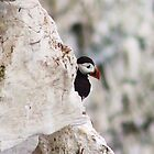 peeking puffin by xxnatbxx