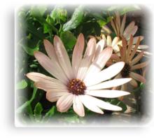 Daisy, Daisy - Rectangular Vignette Canvas Print