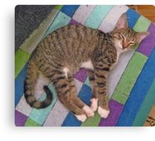 A Tabby Kitten Named Taffy Canvas Print