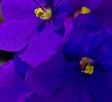The Color Purple by PhotoKismet