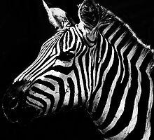 Stripes by Damienne Bingham