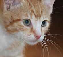 Little Tabby by DebbieCHayes