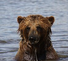 Grizzly Bear - Alaska by Melissa Seaback