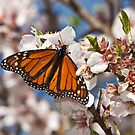 Magnificent Monarch by Barb Leopold