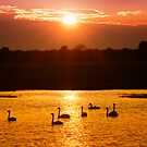 Sunset on swan lake (polder in The Netherlands) by THHoang