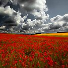 Norfolk Poppy Fields by Norfolkimages