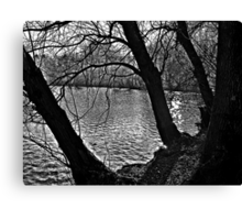 Weeping Trees Canvas Print