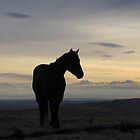 Greeting The Dawn by Kathi Arnell