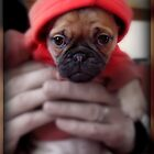 Baby Puddie by Simonka