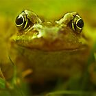 Frog by cameraimagery
