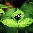 Moth..... by DaveHrusecky