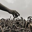 Streicheln der Weizen by Luke Griffin