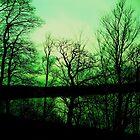 reflections in green by marysia wojtaszek