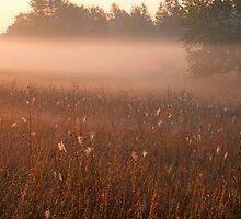 Foggy Stony Creek Park by Bill Spengler