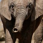 Babe - Elephant of Addo Elephant Park by Nicole Shea