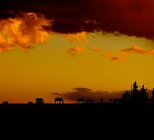 Pryor Mountain Wild Horses at Sunset by sandyelmore