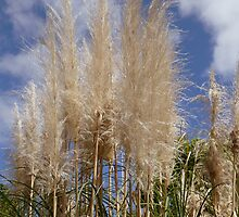 Feathery Grasses by 2HivelysArt