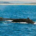 Twin Humpbacks by Penny Smith