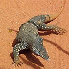 Perentie Lizard  by Angie66