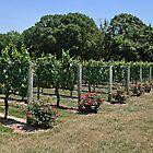 The Wine Aisles by Sally Kady