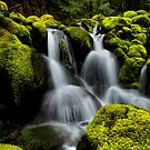 In The Green by Charles &amp; Patricia   Harkins ~ Picture Oregon