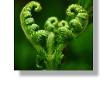 Fern by HJIrvine