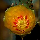 Cactus Flowers by Richard Rushton