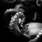 Octopus in black and white by Lauren Neely