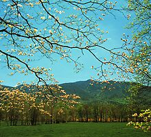 SPRING DOGWOOD,CADES COVE by Chuck Wickham